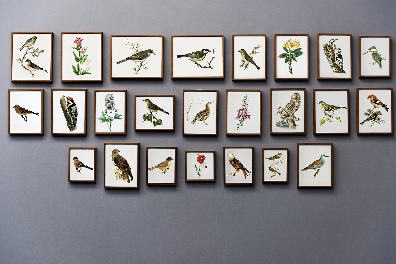 Art prints of birds and flowers on a wall