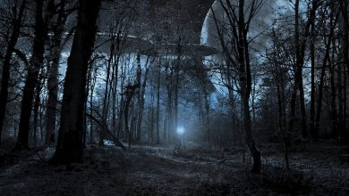 Alien spacecraft in a forest