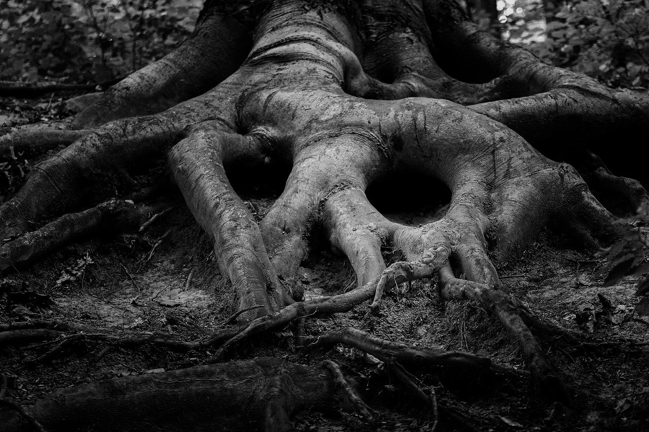 A black and white photo of tree roots